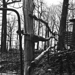 barren fall trees in forest with fence made of wood and metal gate